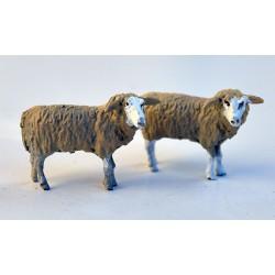 HEAD TURNED SHEEP 0